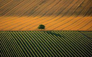 agricultural-landscape
